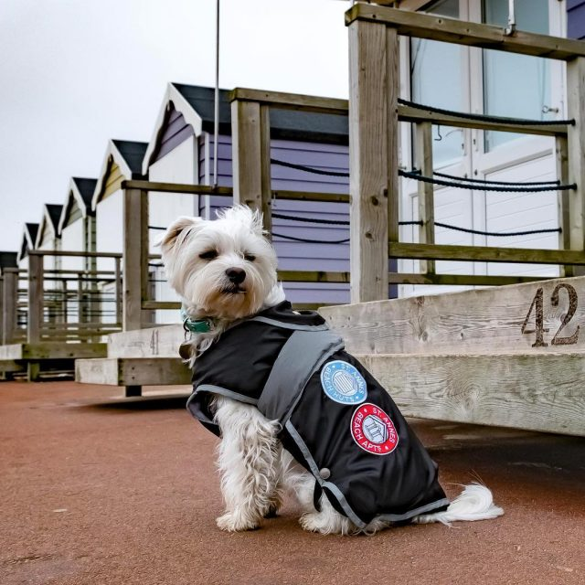 Woody helping to promote the Beach Huts and Apartments workingdogsofinstagramhellip