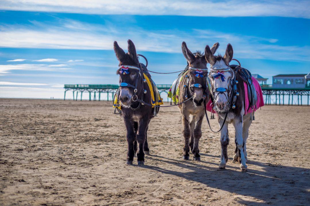 Summer 2019 | Seaside | Lancashire